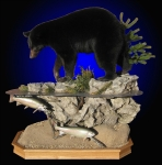 Black Bear, Lifesize Mount, on habitat scene with trout