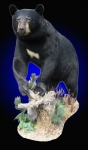 Black Bear, Front elevated on habitat scene without finished wood base