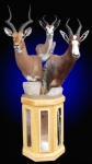 Blesbok, Springbok, Impala Pedestal Mount with Backskin Inlays and habitat