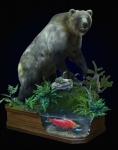 Brown Bear Full Mount on Finished Walnut Habitat with Sockeye Salmon