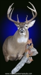 deer shoulder mount with accents, deer mount