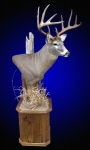 Whitetail Deer, Pedestal Mount on