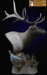 Elk pedestal mount shoulder mount