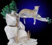 Lifesize Leopard Mount Lying on Limb.