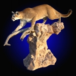 Mountain Lion LifesizeMount on Desert Rock Base