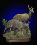 Nyala, Double Lifesize Mount on Finished Walnut Habiitat Scene