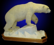 Polar Bear, Lifesize on Finished Oak Habitat with