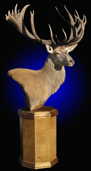 Ram For Sale >> Mayes Taxidermy Studio New Zealand Taxidermy & Big Game ...