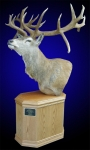 Red Stag Pedestal Mount #2