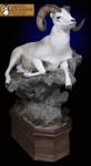 Lifesize Dall Sheep, Full Mount Dall sheep