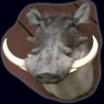 Warthog, Standard Wall Shoulder Mount
