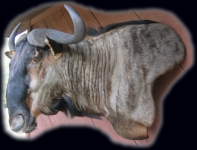 Blue Wildebeest, Wall Pedestal Mount