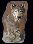 Wolf, Pedestal Mount on Rock Base