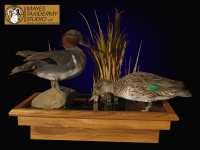 Greenwing Teal Taxidermy Mount