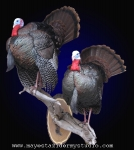 Strutting turkey mount, Strutting turkey taxidermy, turkey mount wisconsin