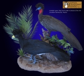 Crested Guan and Great Curassow Taxidermy Mount