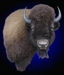 Bison Shoulder Mount, Wall Pedestal Mount