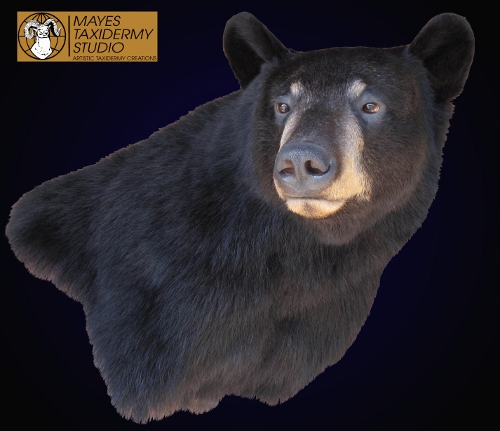 Mayes Taxidermy Studio Wisconsin Black Brown Grizzly