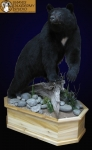 Black Bear lifesize mount, on finished cedar base, black bear full mount picture