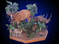 Bongo Lifesize Mount on Habitat with Sitatunga, Blue Duiker and Bush Duiker