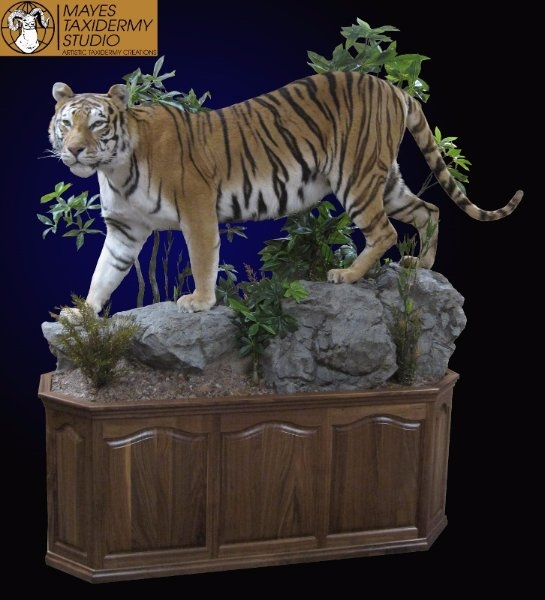 Bengal Tiger Mount