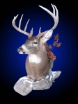 Whitetail Deer, Standard Shoulder Mount with Accents