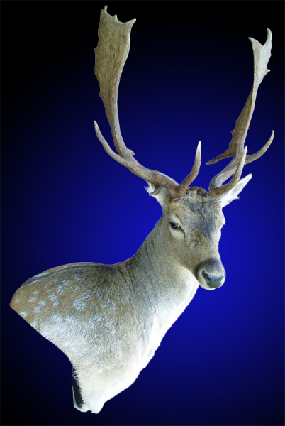 Mayes Taxidermy Studio New Zealand Taxidermy Amp Big Game