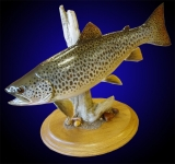 Brown Trout Mount, Tabletop