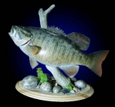 Smallmouth Bass Reproduction, Tabletop
