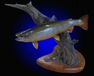 Brook Trout reproduction on tabletop habitat scene