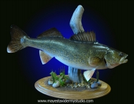 Walleye mount, walleye mount on habitat scene