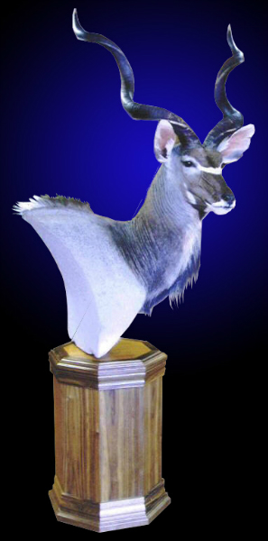 Birds For Sale >> Mayes Taxidermy Studio Kudu Mounts - Mayes Taxidermy Studio