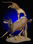 Lifesize Leopard Mount ,attacking Nyala