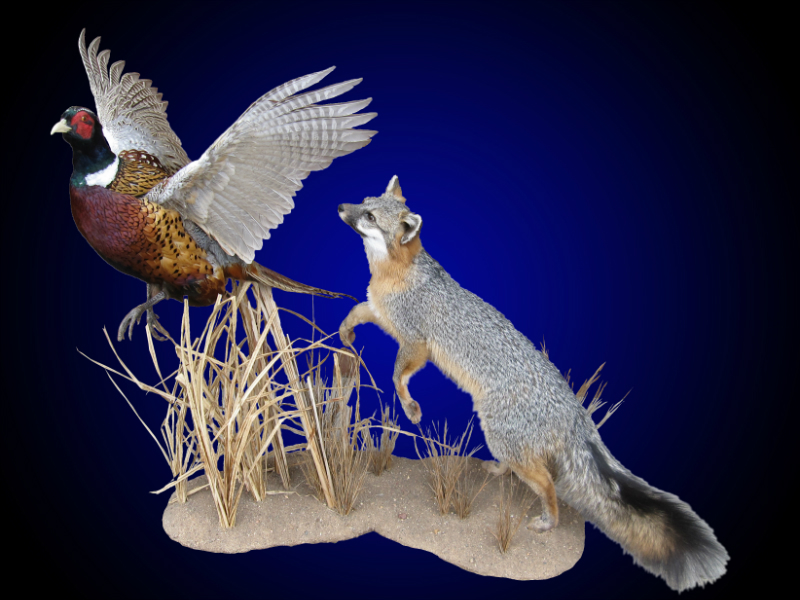 Exotic Birds For Sale >> Mayes Taxidermy Studio Bobcat Mounts & Exotic Taxidermy in Wisconsin from Mayes Taxidermy Studio