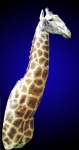 Giraffe, Starndard Shoulder Mount, Upright