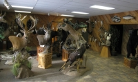 showroom-picture