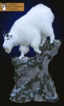 Mountain Goat Full Mount Lifesize