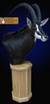 Sable Pedestal Mount, Sable Mount, Sable Shoulder Mount