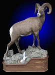 Bighorn sheep mount, Lifesize bighorn sheep, on rock and snow base