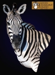 Zebra wall pedestal mount, Zebra shoulder mount